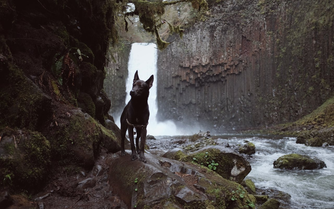 AWAYN IMAGE Silver Falls State Park
