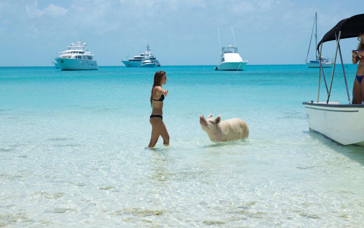 AWAYN IMAGE Swim with Pigs on the Big Majors Cay