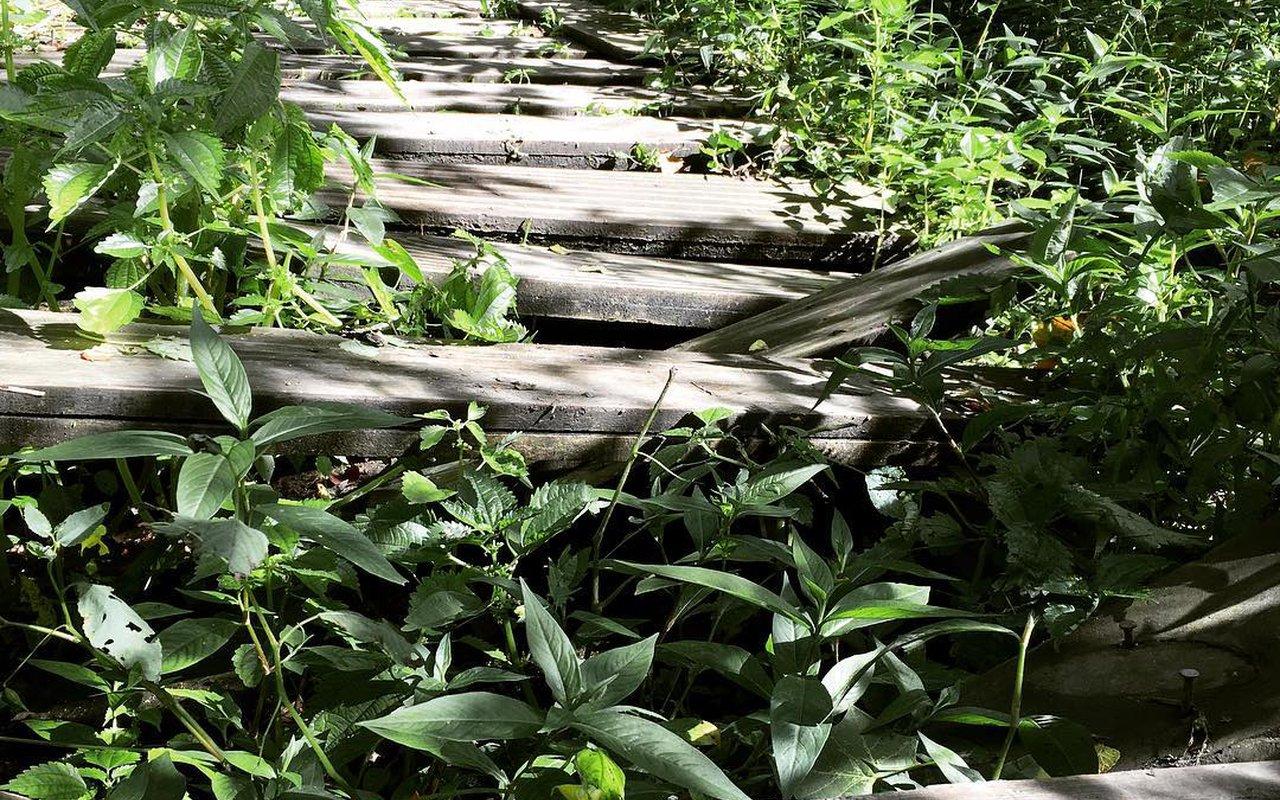 AWAYN IMAGE South Gorge Trail Cuyahoga Falls