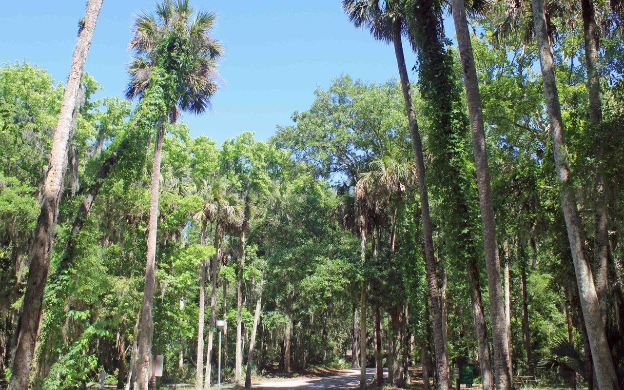 AWAYN IMAGE Kathryn Abbey Hanna Park Trail