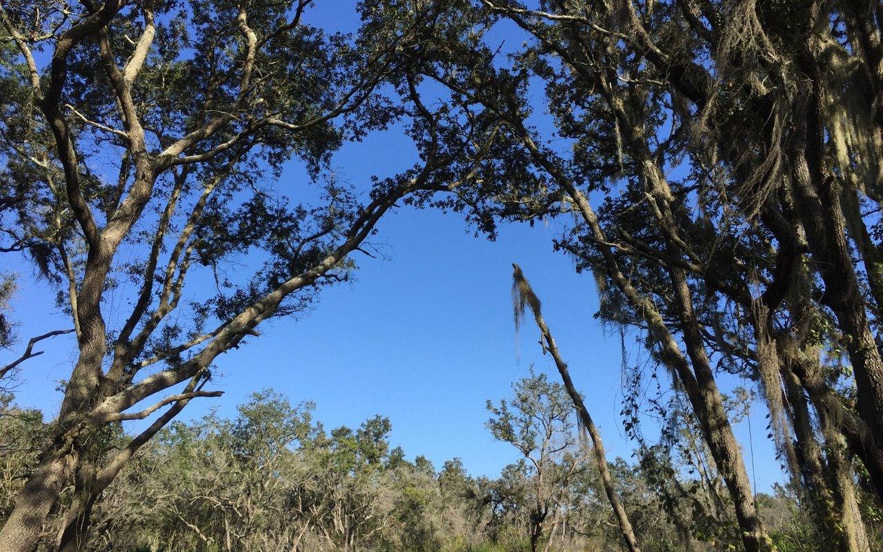 AWAYN IMAGE Alafia State Park Trail