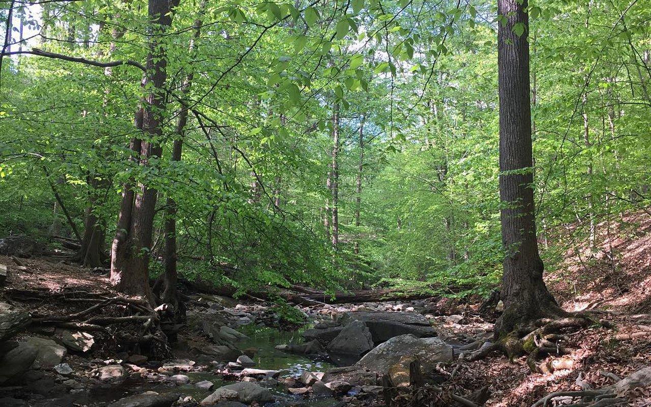 AWAYN IMAGE Donaldson Run Trail