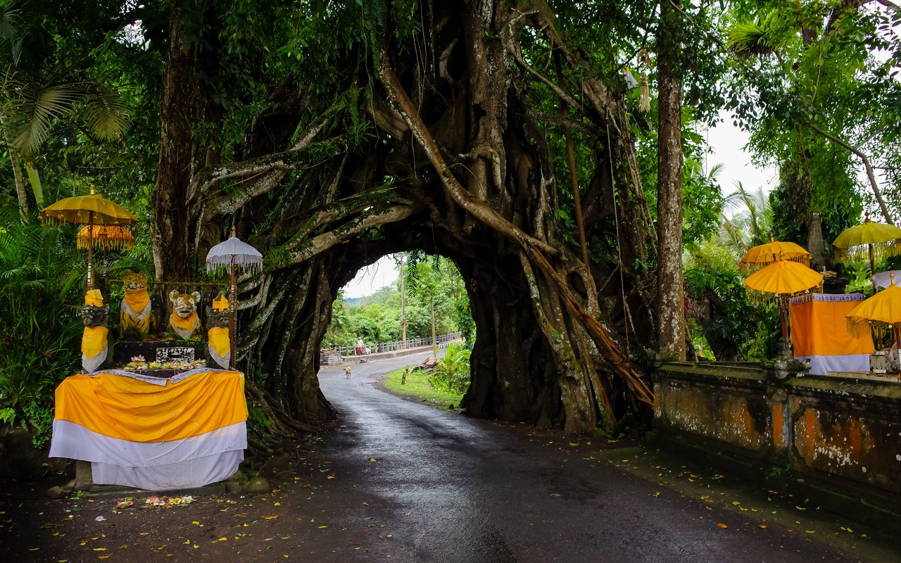 AWAYN IMAGE Visit Bunut Bolong – the tree with a hole that keeps tiger spirits