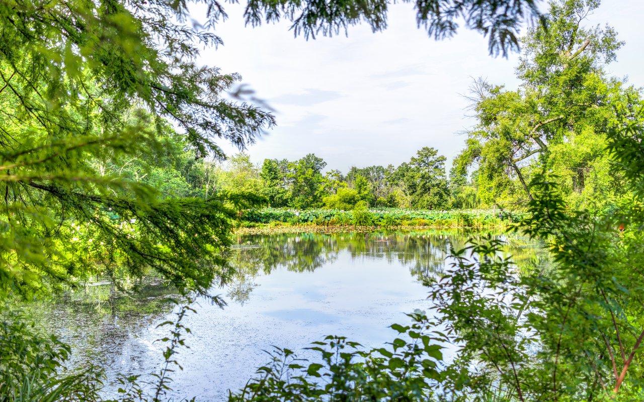 AWAYN IMAGE Kenilworth Park and Aquatic Gardens