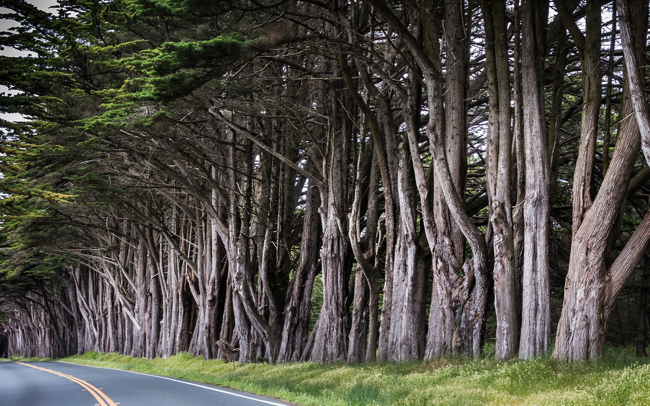 AWAYN IMAGE Photograph Cypress Tree Tunnel in Point Reyes