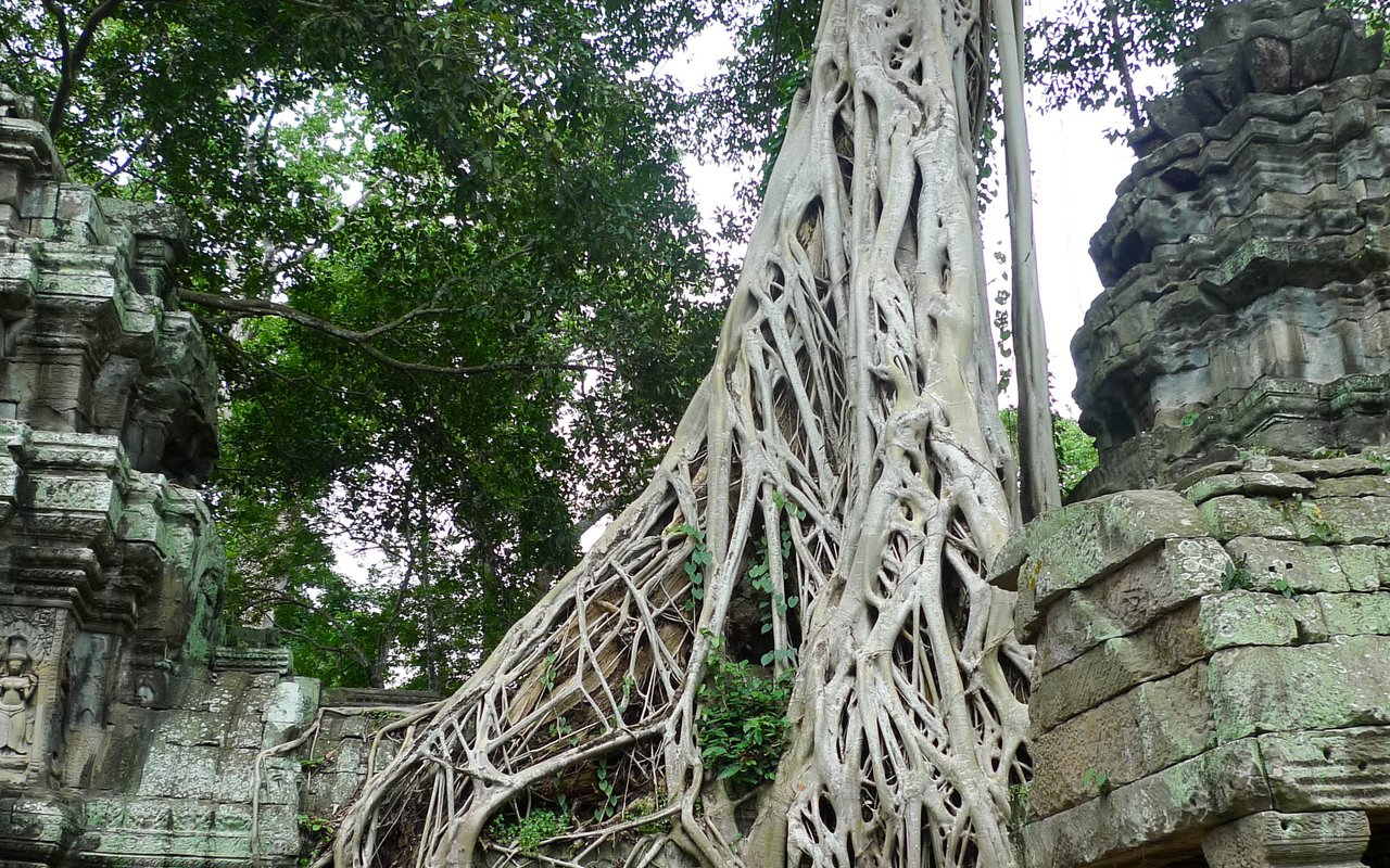 AWAYN IMAGE Walk along the giant sculptures of Ta Prohm Temple