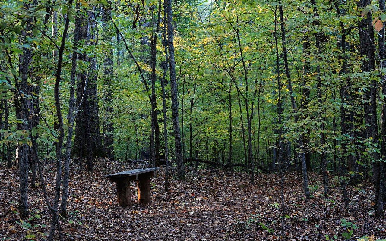 AWAYN IMAGE Sweetwater Creek State park