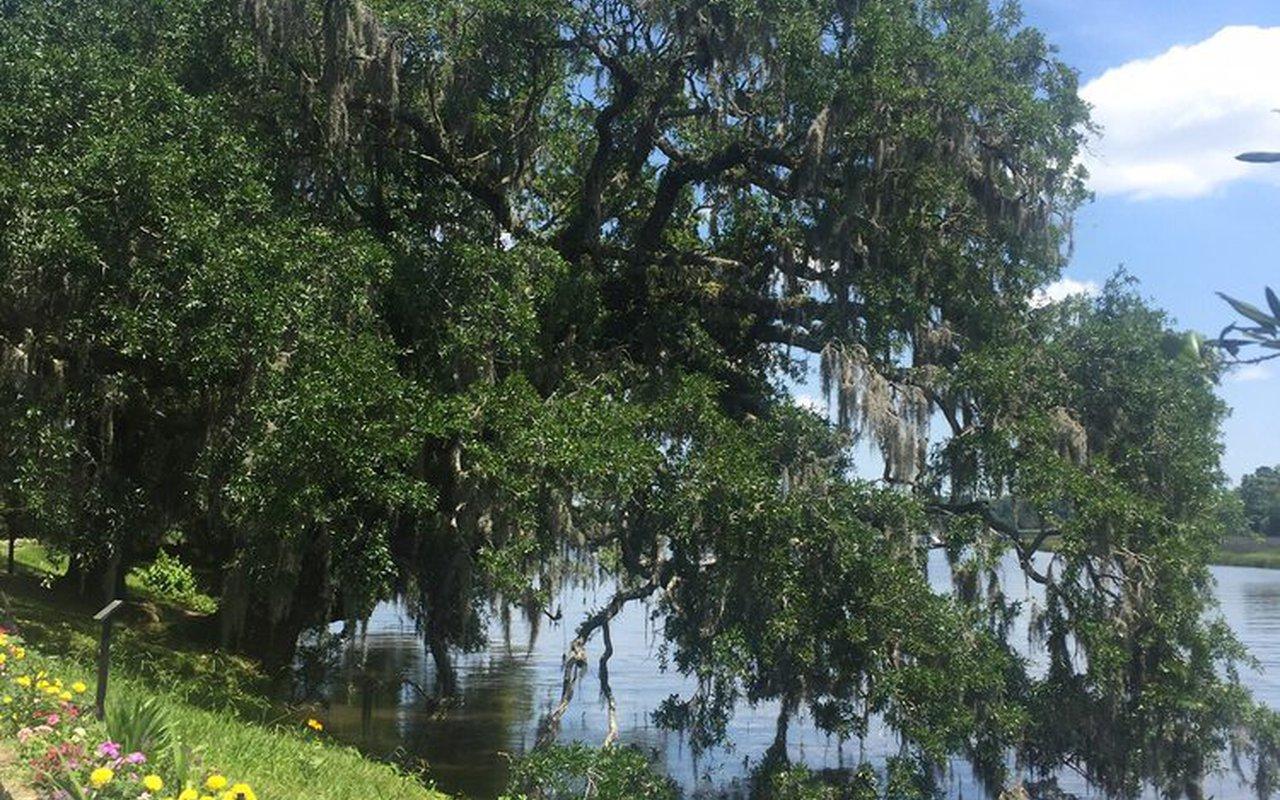 AWAYN IMAGE Magnolia Plantation and Gardens