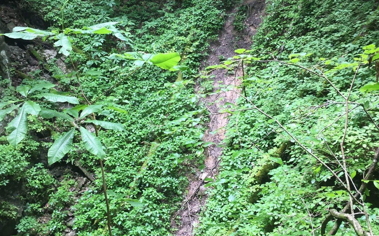 AWAYN IMAGE Virgin Falls Trail