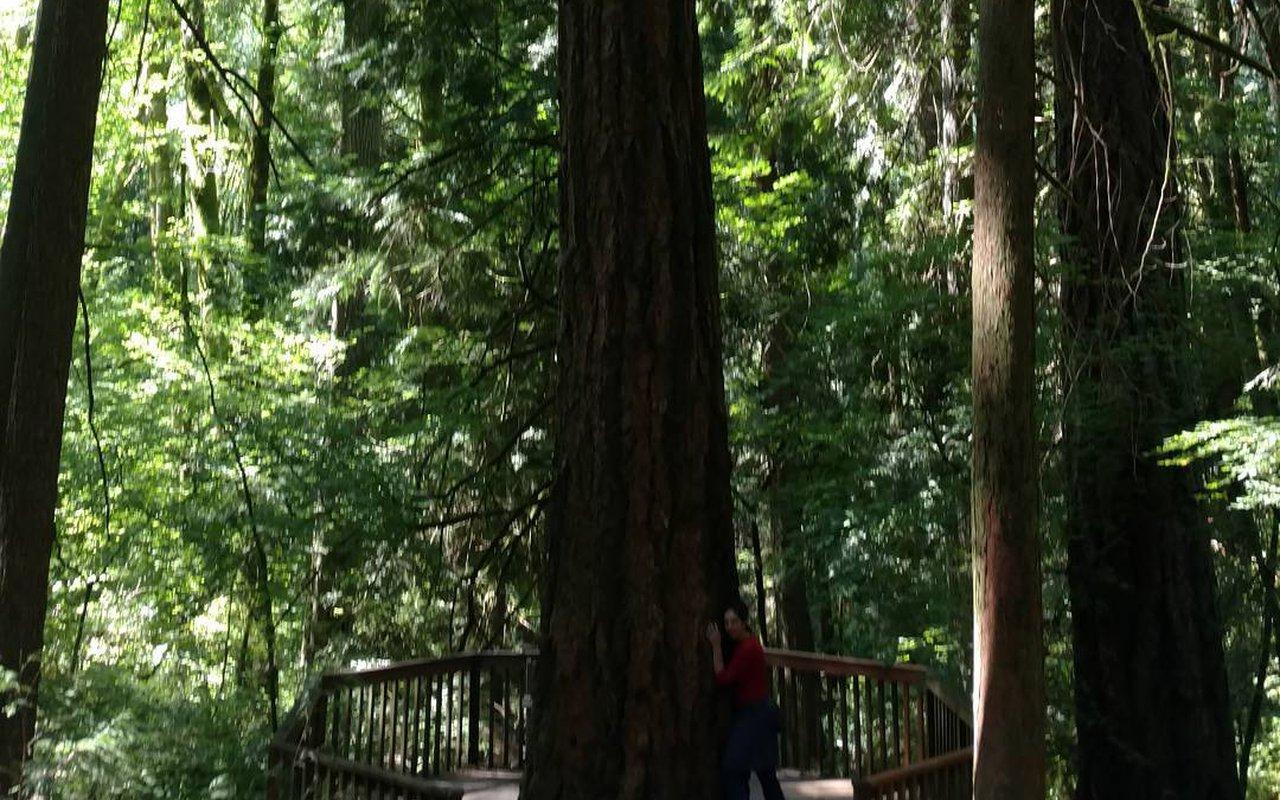AWAYN IMAGE Jay Trail- Audubon Society of Portland