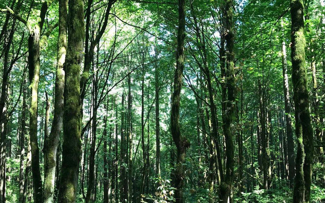 AWAYN IMAGE Forest Park Loop
