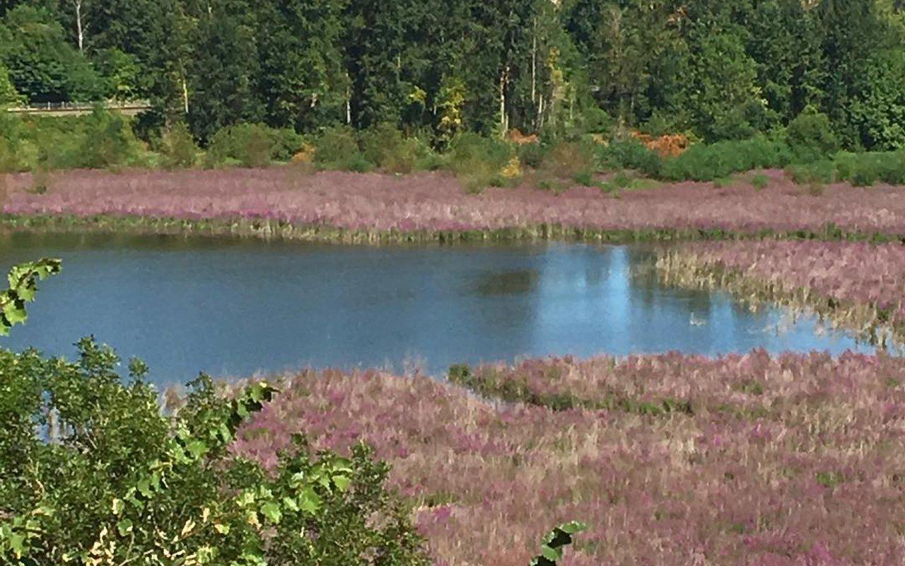 AWAYN IMAGE Oaks Bottom Wildlife Refuge