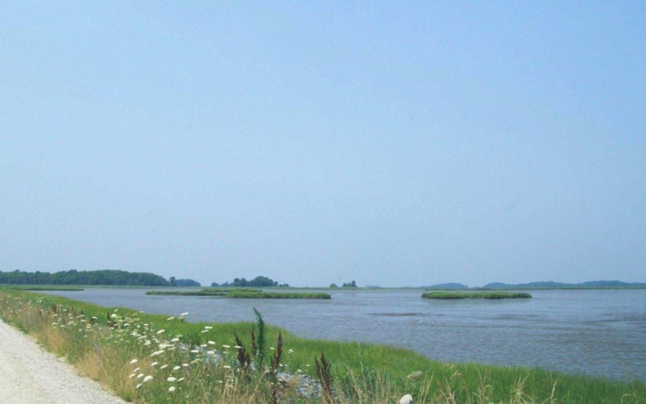 AWAYN IMAGE Bombay Hook National Wildlife Refuge Loop