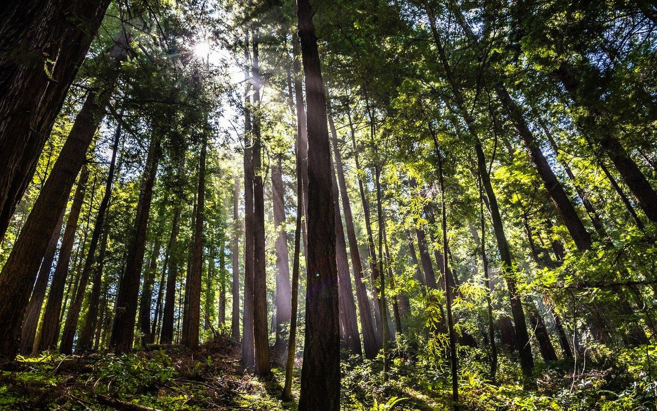 AWAYN IMAGE Hike Butano state park