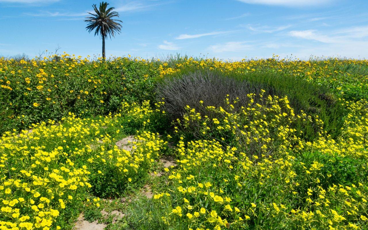 AWAYN IMAGE Hike Bolsa Chica Ecological Reserve