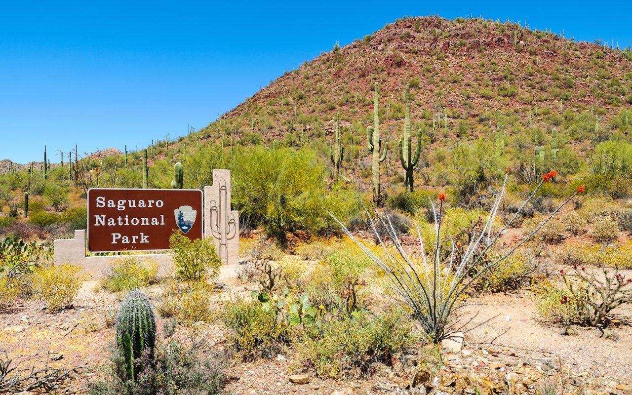 AWAYN IMAGE Saguaro National Park