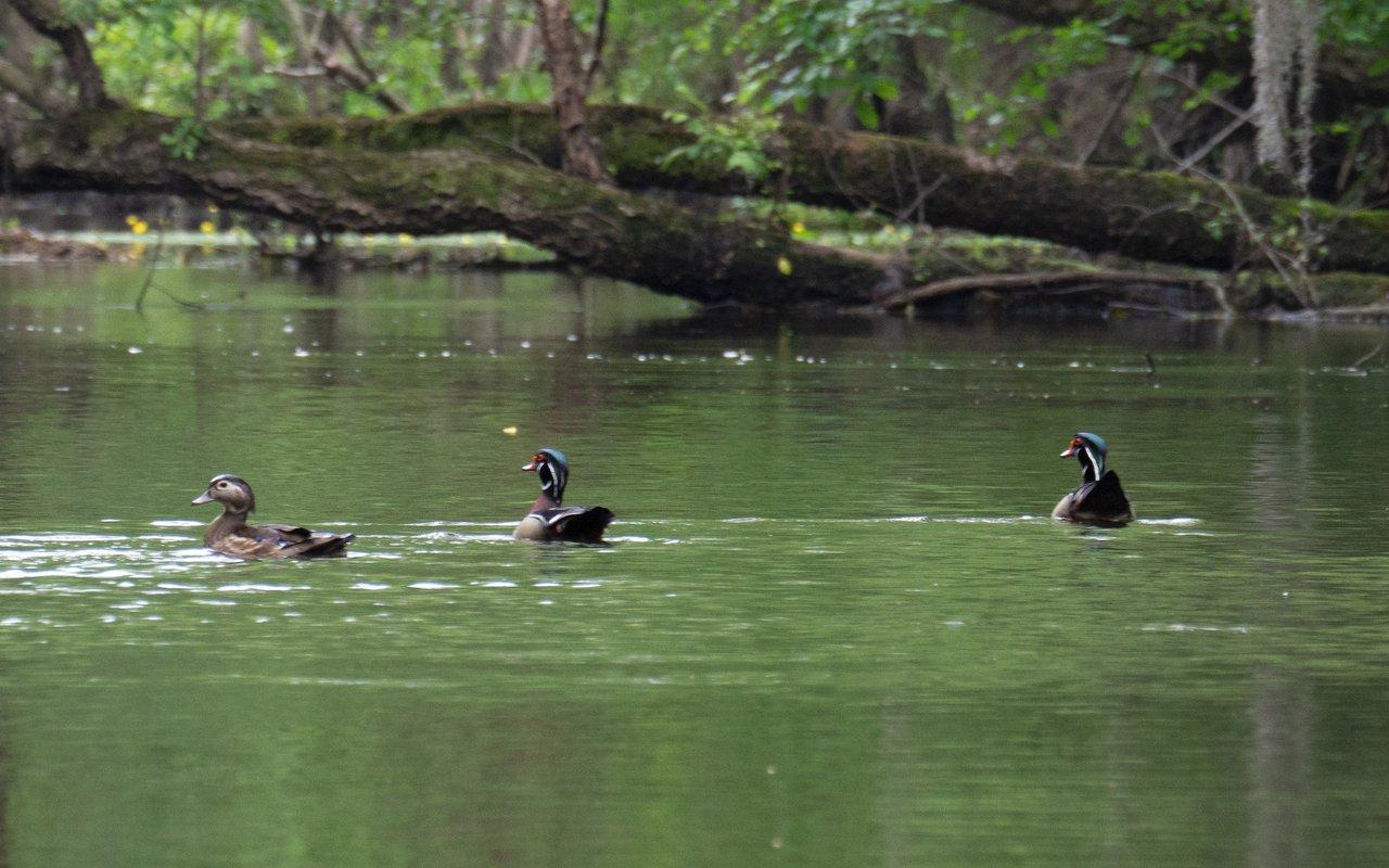 AWAYN IMAGE Paddling the Black River