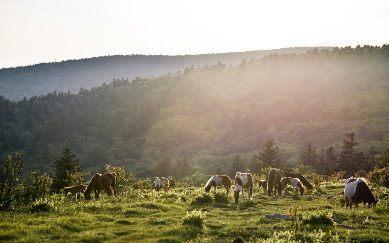 AWAYN IMAGE Grayson Highlands State Park