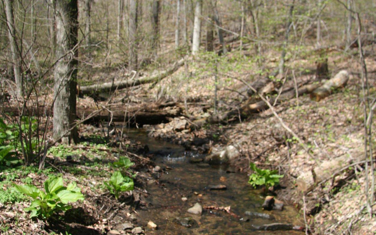 AWAYN IMAGE Walk/ Run Long Path Trail