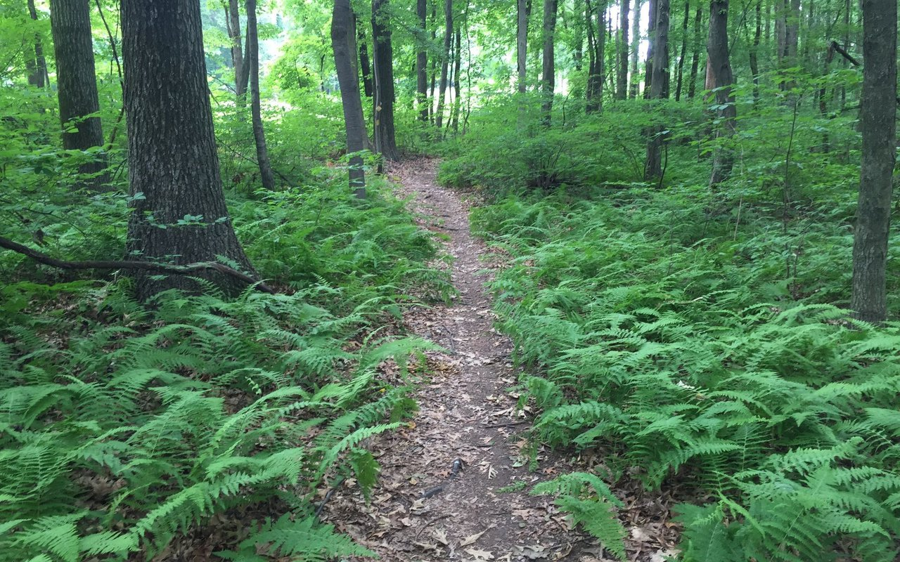 AWAYN IMAGE South Mountain - Orange Trail