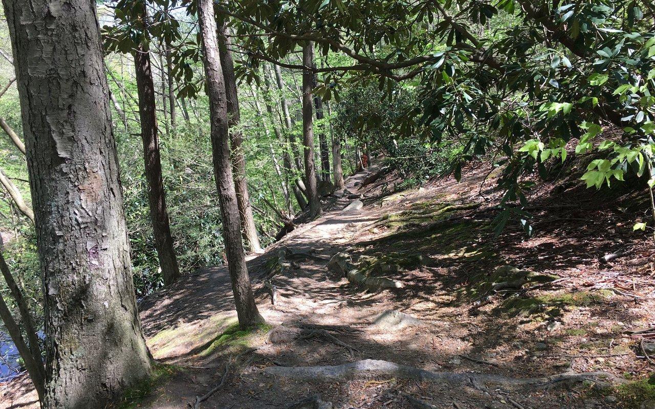 AWAYN IMAGE Wissahickon Creek Gorge Loop Trail