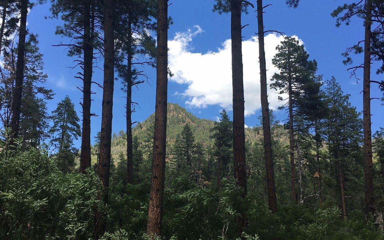 AWAYN IMAGE See Canyon Trail