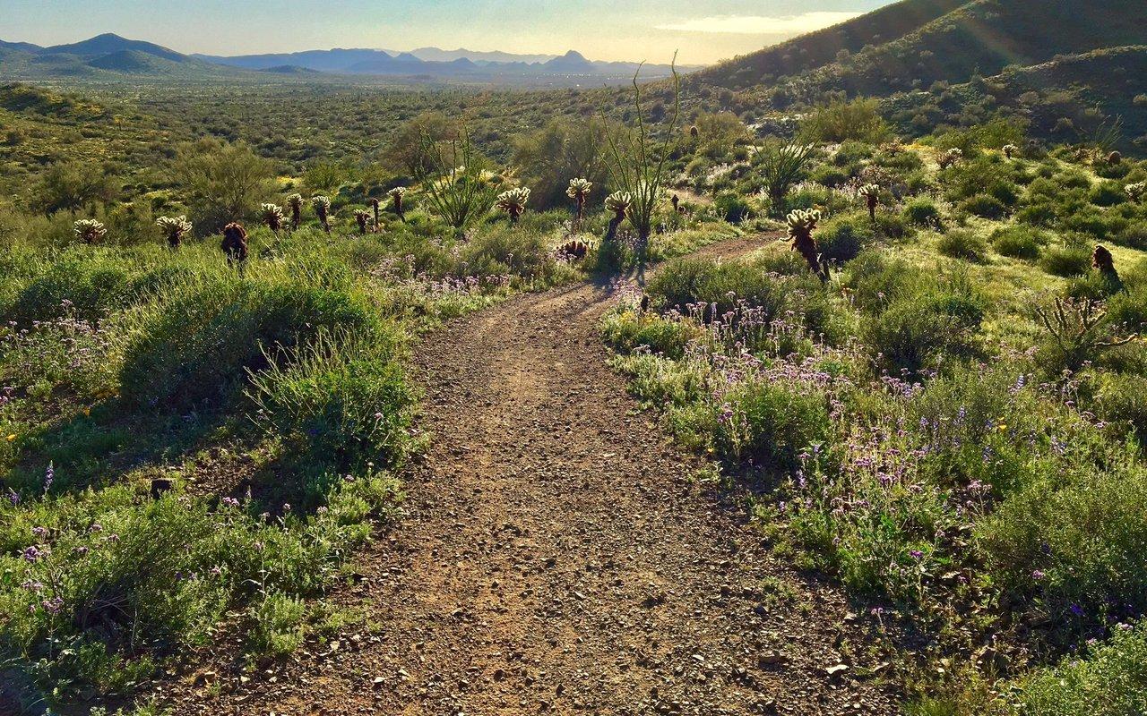 AWAYN IMAGE Sidewinder, Apache Vista, Ocotillo Loop Trail