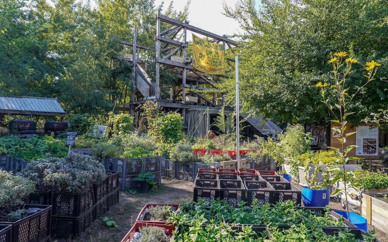AWAYN IMAGE Grow your vegetable Prinzessinnengärten