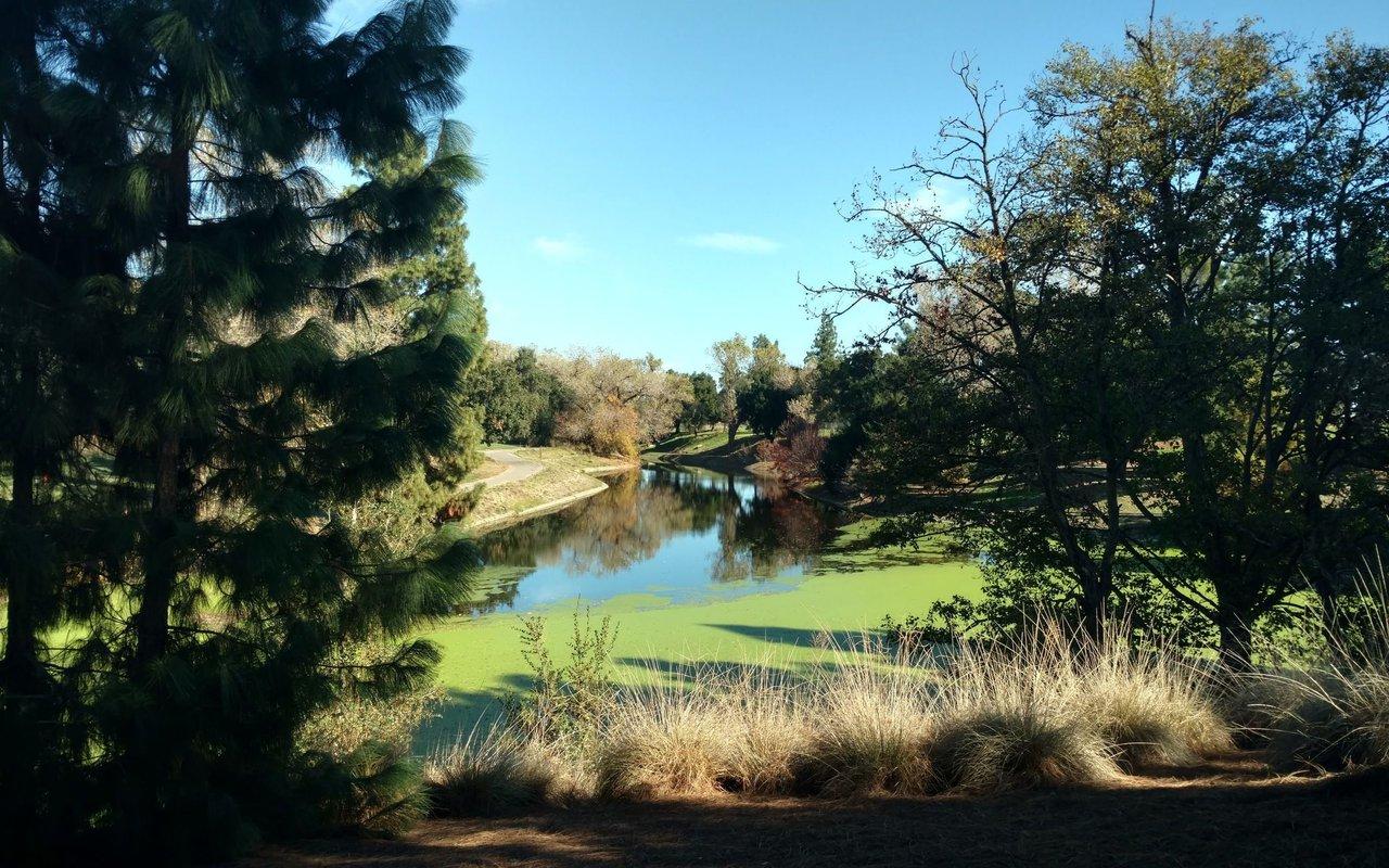AWAYN IMAGE UC Davis Arboretum