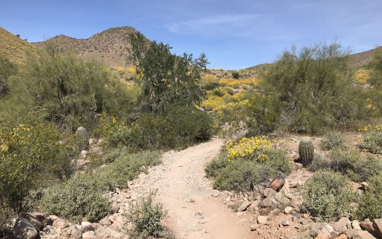 AWAYN IMAGE Lost Dog Wash Trail Hike