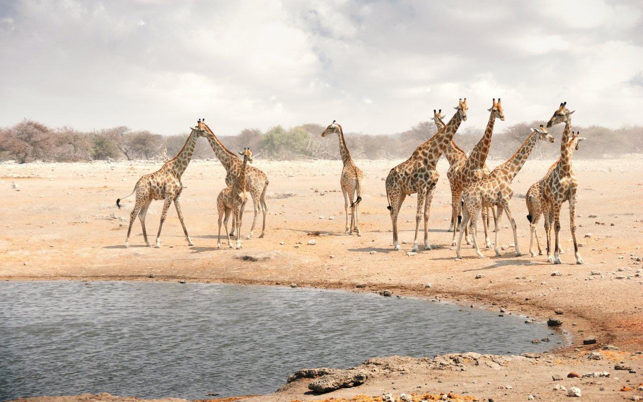 AWAYN IMAGE Etosha National Park