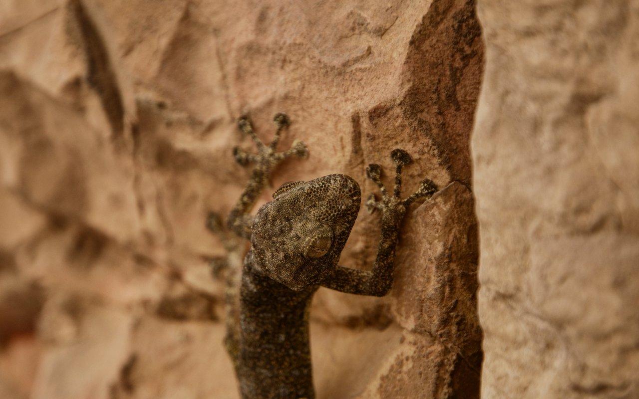 AWAYN IMAGE Petra World Heritage Site
