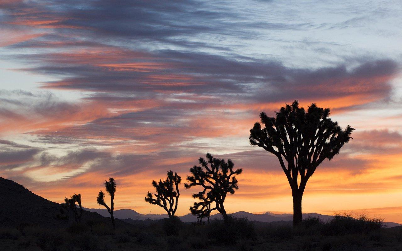 AWAYN IMAGE Caching sunset at Joshua tree national park