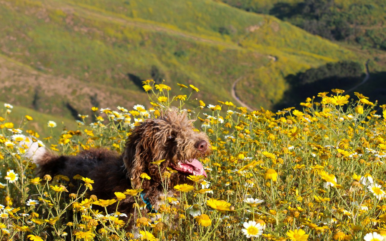 AWAYN IMAGE Explore the Beauties of Arroyo Verde Park in Ventura