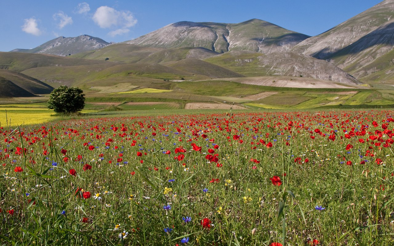 AWAYN IMAGE Hike and photograph the Castelluccio
