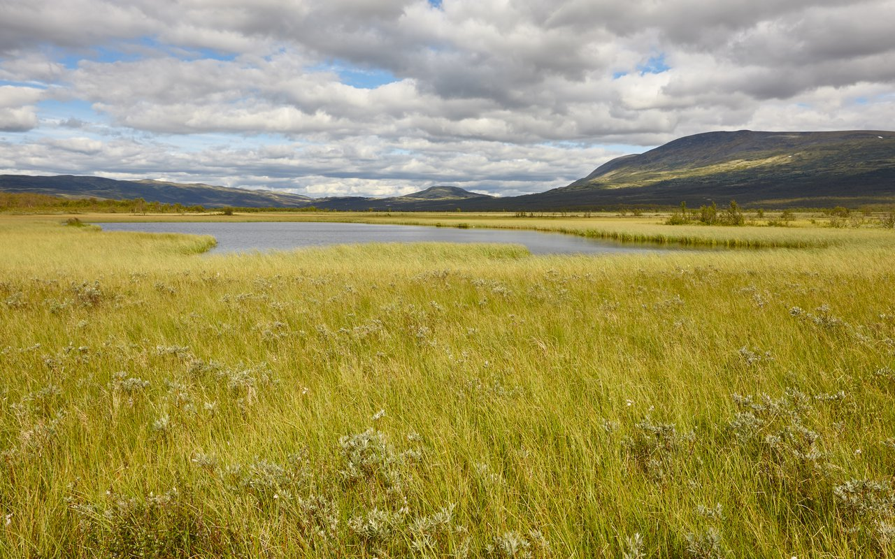 AWAYN IMAGE Walk in Dovrefjell Sunndalsfjella National Park